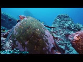 «Тайны подводного мира» (документальный фильм, 2006) 1 часть